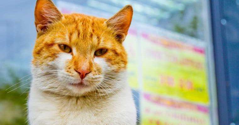 пермский кот выборы губернатора
