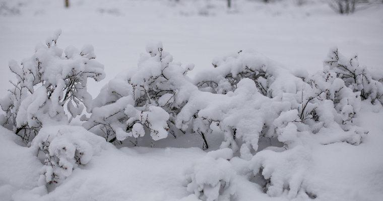 снег в начале лета Ямал видео смотреть