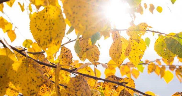 прогнозы погоды осенью