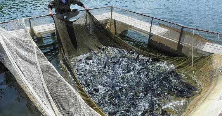 Тюмень вред экологии Каспий