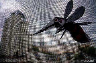 комариные укусы опасны