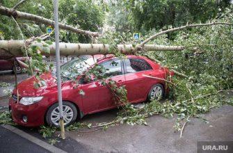 /Московская область ураганы