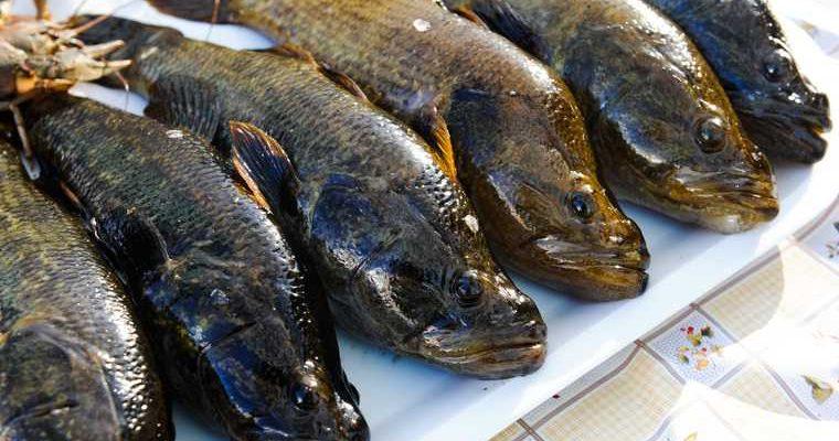 рыболовные предприятия ЯНАО сокращение квот на добычу рыбы