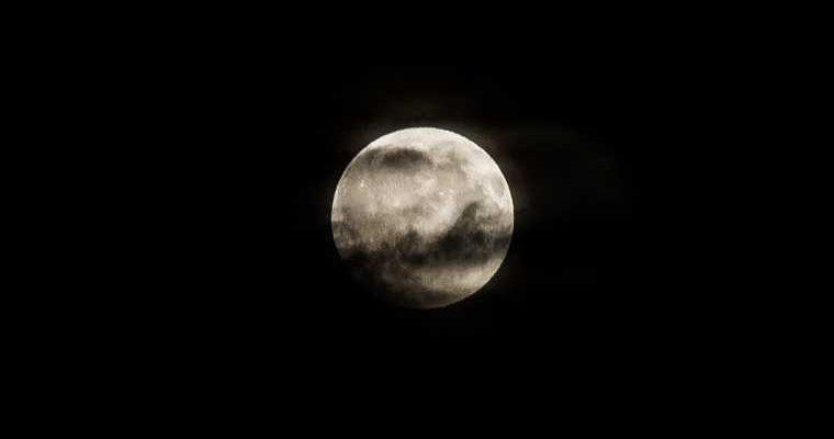 Роскосмос отправит животных к Луне