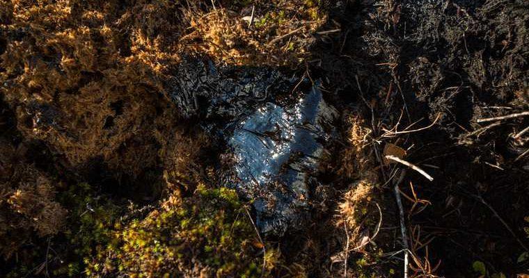 экология ЯНАО разлив нефтепродуктов