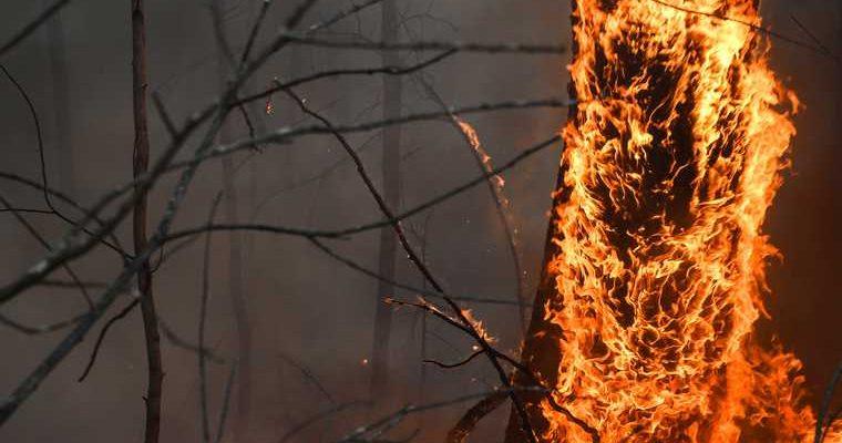 пожар Свердловская область трасса Екатеринбург Тюмень