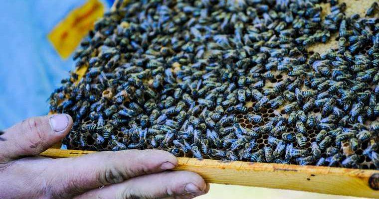 Россия возмещение ущерб пчеловодство отравление пожар восстановление государство