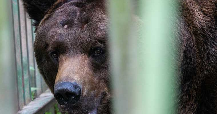 камера засняла в городе медведя